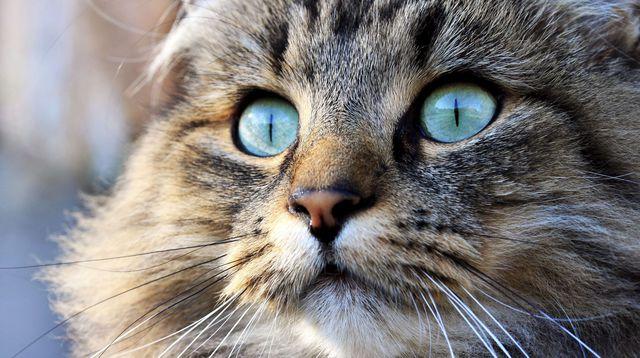 Turquie: condamné à 3 ans de prison ferme pour avoir torturé son chat