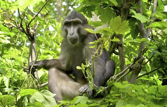 Strasbourg: Nouvelle colère des associations protectrices des animaux contre le centre de primatologie
