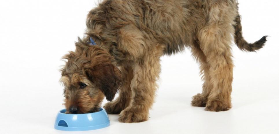 Non, on n'achète pas un chien avec des croquettes !