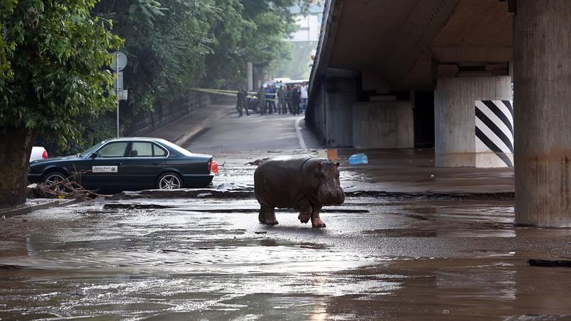 Inondations à Tbilissi: 8 morts et plusieurs animaux sauvages échappés d'un zoo