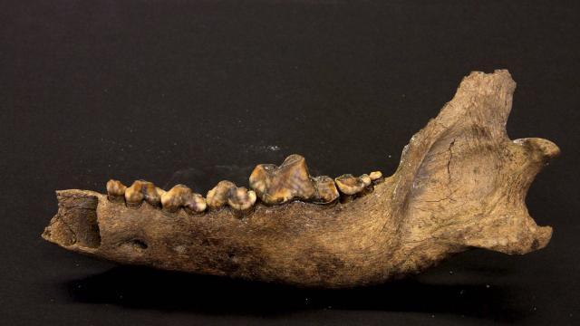 Animaux. Le chien, notre meilleur ami depuis 27 000 ans