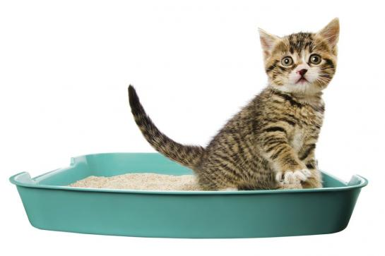 Litière pour chat : pas si inoffensive qu'elle n'y paraît