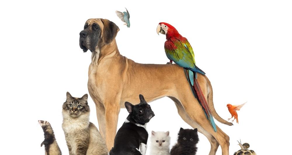 Marché des animaux de compagnie : des opportunités