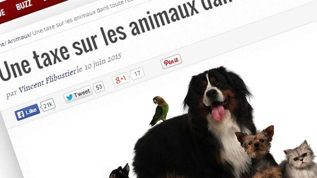 Non, les animaux domestiques ne seront pas taxés