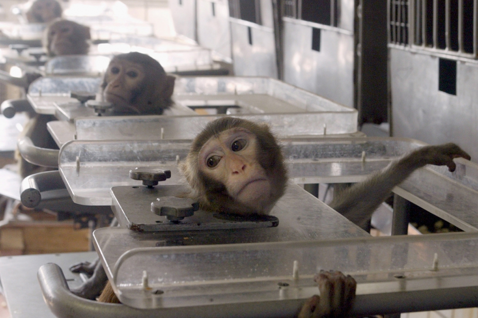 La torture animale va continuer en Europe