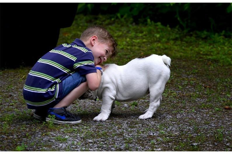Les animaux de compagnie, un allié bien-être