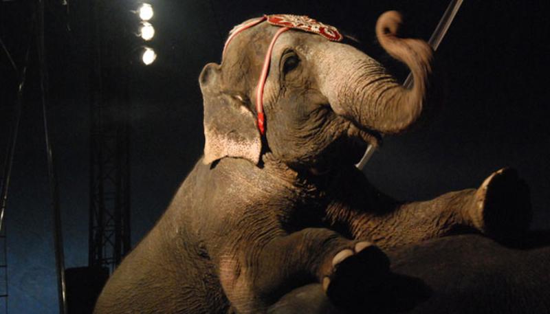 Le Mexique bannit les animaux sauvages des cirques