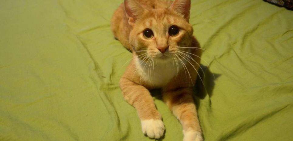Le chat contrôle les souris grâce à… son urine