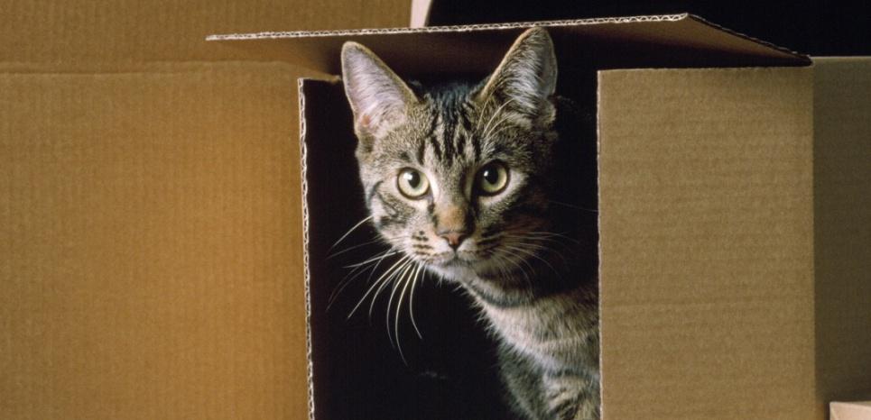 Tout savoir sur le stress du chat