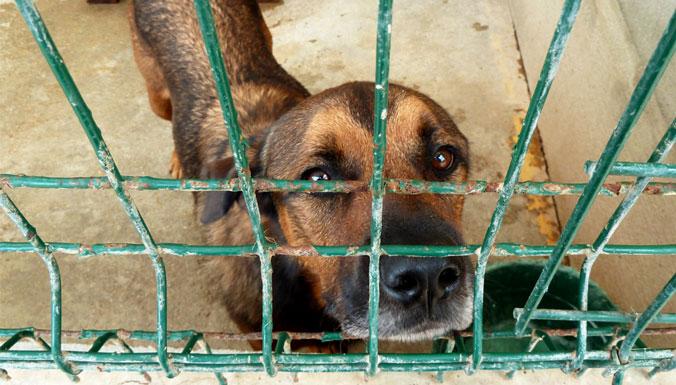 Plus d'1 million d'euros pour les animaux abandonnés des refuges