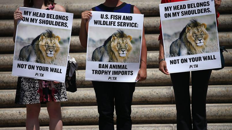 Pourquoi les internautes se mobilisent tant pour les animaux martyrs