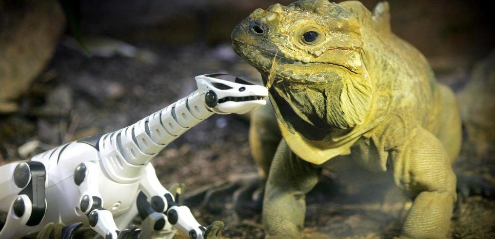 Les animaux de compagnie robotiques : un futur plaisant ?