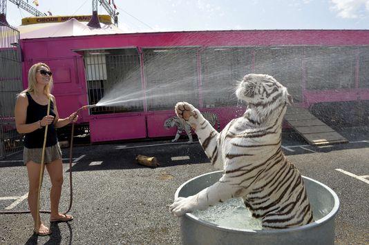 En Espagne, la Catalogne interdit les animaux sauvages dans les cirques