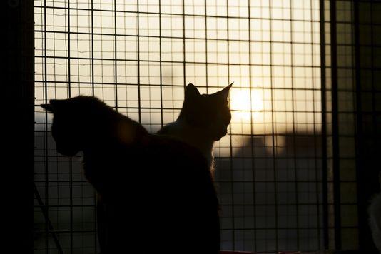 Les chats, premières victimes des abandons d'animaux en été
