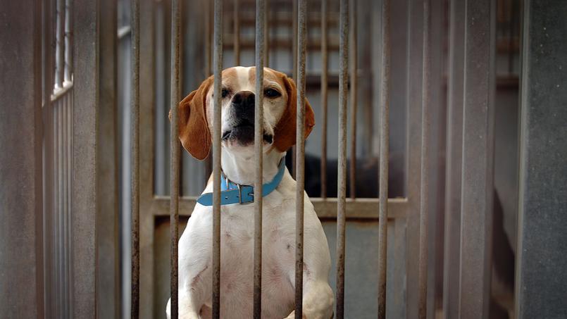 La SPA lance un SOS à l'adoption des animaux abandonnés