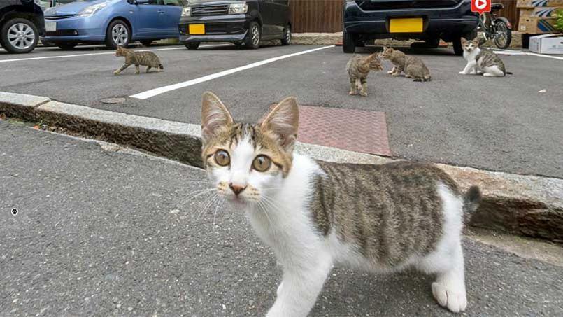 Cat Street View, pour découvrir le Japon à hauteur de chat