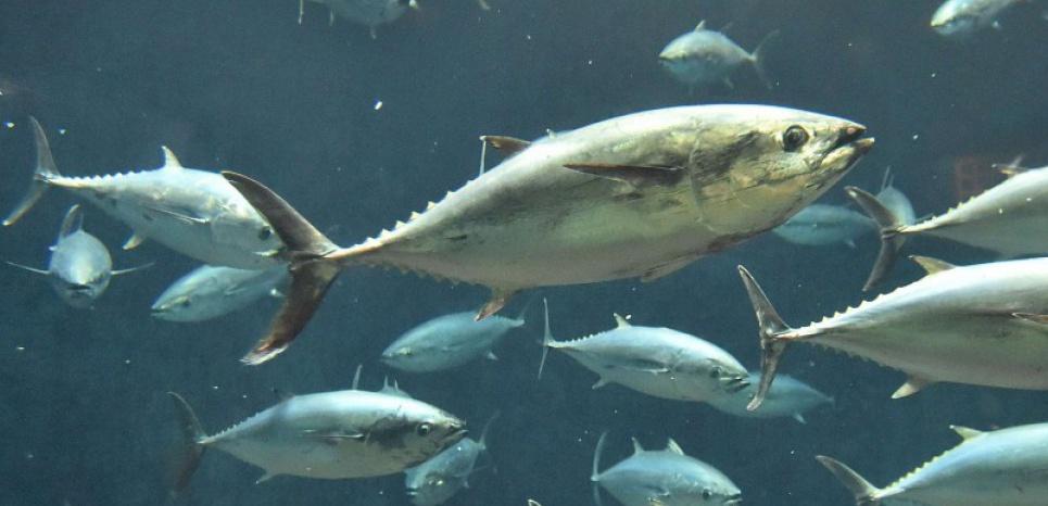 Les populations d'animaux marins ont chuté de moitié en 40 ans