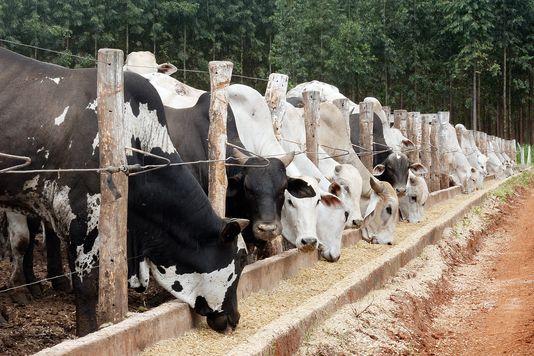 Le Parlement européen bannit les animaux clonés de nos assiettes