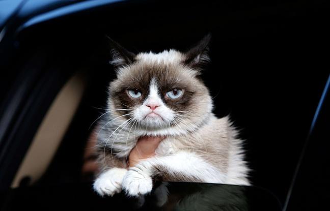 Votre chat serait un «lion», «impulsif» et «névrotique», capable de «vous tuer»