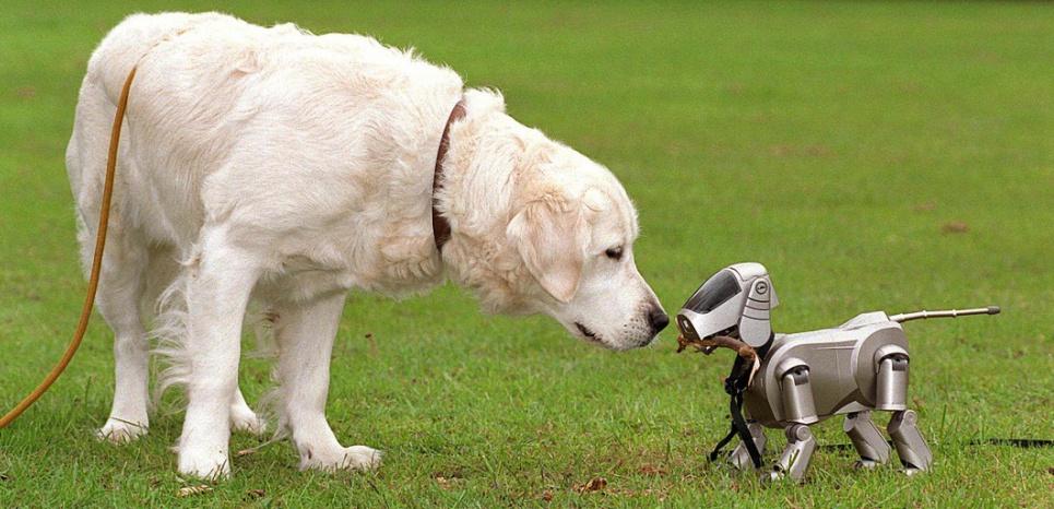 Des robots pour mieux comprendre les animaux