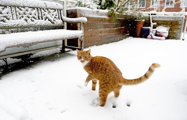 Vague de froid: Comment bien protéger ses animaux de compagnie