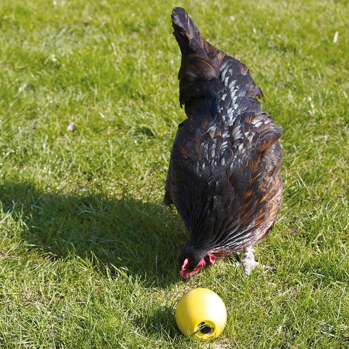 Balle Chicken Fun