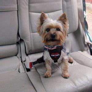 Harnais de voiture Clix Car Safe