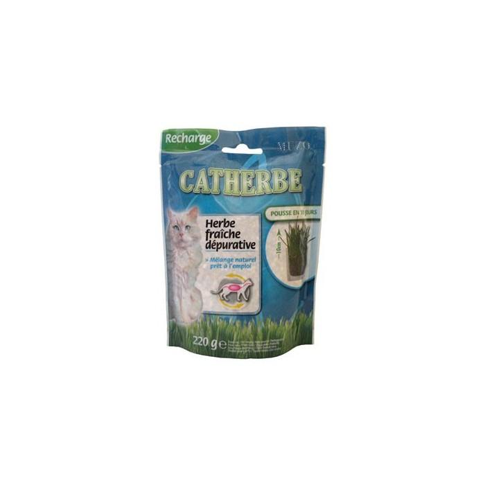 Herbe à chat dépurative Catherbe