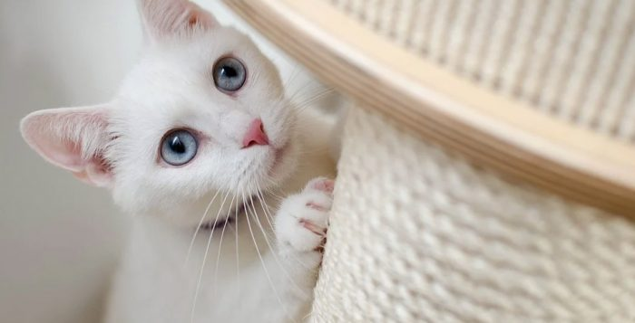 Trouver le cadeau idéal pour votre chat